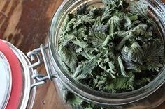 dried nettle for hypothyroidism