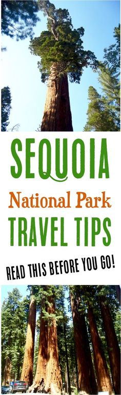 Sequoia National Park Things To Do! Best Hikes in Sequoia, plus what to bring on your visit! | NeverEndingJourneys.com