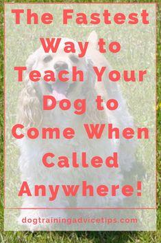 Basic Dog Training, Training Your Puppy, Dachshund Breed, Dog Grooming Tips, Doodle Dog, Dog Hacks, Schnauzers, Chihuahuas, Yorkies