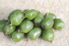Reads Nursery - Kiwi arguta Issai,  actinidia cultivars Kiwis goes down to -20C (red version also available)