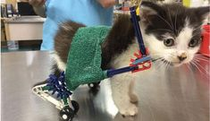Vet Assistant Uses K'NEX Construction Set to Make Wheelchair Chariot for Kitten