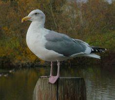 Portland Oregon Backyard Birds: Commonwealth Park in Beaverton