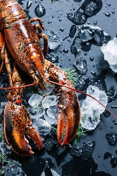 Lobster on ice. Blanched lobster on ice on dark background. Seen from above. by Darren Muir