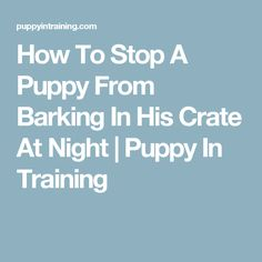 How To Stop A Puppy From Barking In His Crate At Night | Puppy In Training