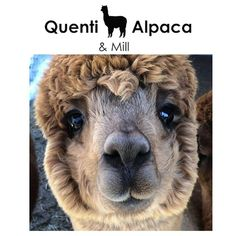 Things that make you go AWW! Like puppies, bunnies, babies, and so on. A place for really cute pictures and videos! Wildlife Nature, Nature Animals, Funny Animals, Cute Animals, Jokes For Kids, Baby Alpaca, Animal Rescue Shelters, Animal Photography, Funny Images