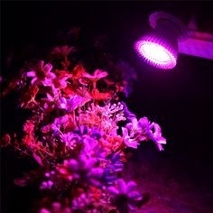 E27 Lamp 10W Led Grow Light AC85-265V Led Growing Lamp for Flowers Plants Vegetables Growing Flowering Plant Hydropon System1
