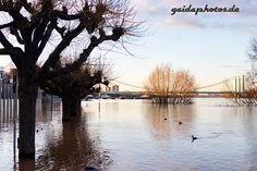Hochwasser am Rhein - Gaidaphotos Gallerie