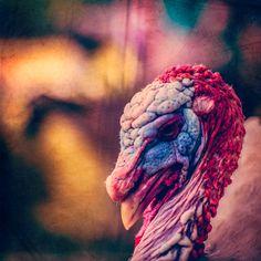 Happy Thanksgiving from   http://www.stustustudio.com/  http://facebook.com/justsaytheword