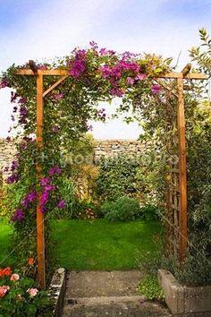 english garden trellis - Google Search