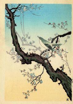 Koitsu, Tsuchiya (1870-1949) - Plum Warbler