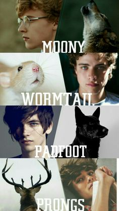 Harry Potter characters aesthetics MOONY - Remus Lupin WORMTAIL - Peter Pettigrew PADFOOT - Sirius Black PRONGS - James Potter By Camy Malfoy