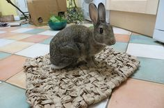 How to weave a paper mat for your bunny - nawww!