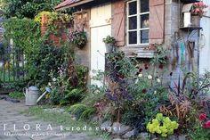 フローラのガーデニング・園芸作業日記-花壇の様子
