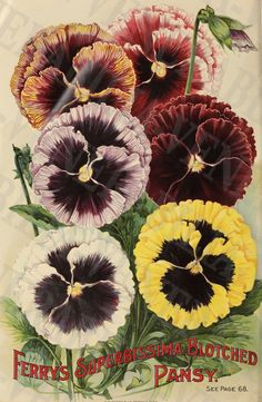 1875-1930 Collection of 18 Vintage Flower от LithographLibrary