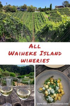 Find your favourite Waiheke Vineyards (tested by a local), know which ones to go. Plus: Best Waiheke Island wine tours! New Zealand Wine, New Zealand Travel, Wine Facts, Waiheke Island, Island Map, Wine Decanter, Vineyard, Wineries, India