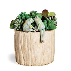 Kissing Frogs Planter LOVE OUR NEW PRODUCTS!  Come see our new product here: www.femailcreatio... #UniqueGifts #GiftsForWomen #Gifts #GiftsForAllOccassions #InspirationalGifts #NewProducts #Trendy #Sassy