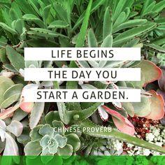 Ready to begin? garden inspiration, gardening quotes, succulent garden, green thumb