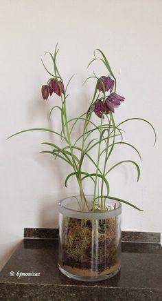 diy weisse phalaenopsis orchidee selber in glas eintopfen nat rlich dekorieren ideen. Black Bedroom Furniture Sets. Home Design Ideas