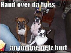 Funny dog pictures with quotes, funny dog picture, puppy dog ...