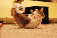 funny liquid cats in jar