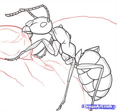 Drawing Step By Step how to draw ants step 23 Pencil Art Drawings, Drawing Sketches, Drawing Guide, Animal Sketches, Animal Drawings, Ant Drawing, Drawing Step, Ant Tattoo, Ant Art