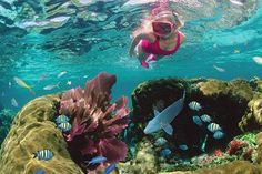 Go snorkeling in the Florida Keys with your family. Whether you're a snorkel pro or it's your first time under the sea, you'll have a blast.