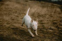 Animals, Instagram, Animales, Animaux, Animal, Animais
