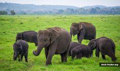 Elefanten im Kaudulla Nationalpark - gelegen im nördlichen Zentrum der Insel