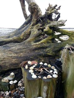 Sea Witch Altar, for the coastal Pagans. Water Witch, Sea Witch, Beltane, Wicca Altar, Sabbats, Witch Aesthetic, Book Of Shadows, Witchcraft, Ancient Greece