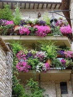 82 Best Small Balcony Garden Images On Pinterest