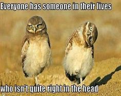 not quite right in the head funny quotes quote lol funny quote funny quotes humor