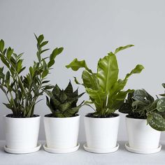 I do love my succulents and ferns, not to mention the white pots! Cute for a bathroom or bedroom