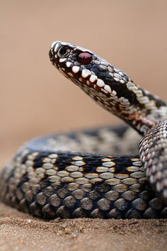 Sssssnake energy may look like just another cord coming from a power chakra but it more of a  dark energy that someone uses. name it and choose not to engage it. that is unless you want to learn first hand how tenacious snake can be.