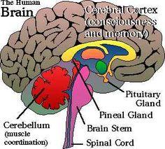 THE PINEAL GLAND  THE PSYCHEDELIC SINGLE EYE
