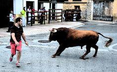 Santacara: ToroPasión (2) Fiestas de Santa Eufemia Cow, Animals, Saints, September, Parties, Animais, Animales, Animaux, Cattle
