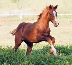 REDBUD RANCH | HOMEREDBUD RANCH | HOME Connemara Pony, Mini Pony, Dressage, Ponies, Ranch, Animals, Sport, Future, Book