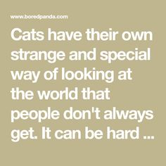 Cats have their own strange and special way of looking at the world that people don't always get. It can be hard to tell what your cat is thinking (or,