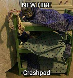 New Crashpad