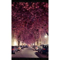 *Cherry Blossom Tunnel* Bonn, Germany ❤ liked on Polyvore featuring backgrounds