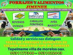 FORRAJES  Y ALIMENTOS JIMENEZ - http://negociosoaxaca.com/anuncio/forrajes-y-alimentos-jimenez/