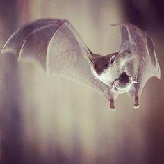 mom and baby bat