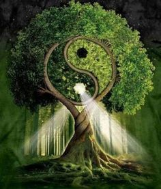 The tree of Yin-Yang symbolizes Life itself. It is the Ultimate Tree of Life. Mother Earth, Mother Nature, Tree Of Life, Sacred Geometry, Magick, Feng Shui, Bonsai, Fantasy Art, Fantasy Trees