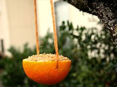 HGTV Gardens shows you how to make an easy homemade bird feeder using only natural ingredients you probably already have on hand.