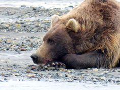 Katmai Peninsula, Hallo Bay, Alaska