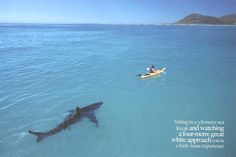 """A four-metre Great White Shark trails a kayaker in a sea kayak. Taken from a September 2005 Africa Geographic article titled """"Shark Detectives"""" about researchers studying Great White Sharks off the coast of South Africa. Shark Week, Orcas, Cool Pictures, Cool Photos, Funny Pictures, Amazing Photos, Wind Surf, Wow Photo, Sneak Attack"""