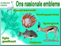 Embleme The Journey Book, Afrikaans Language, South African Flag, Senses Activities, Teaching Aids, My Land, African History, Kids Health, Out Of Africa