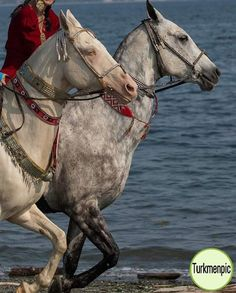 Akhal Tekes - here they are in possibly native gear. :)