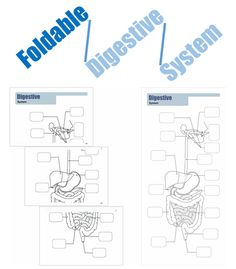 This product can be printed and made by your students. It's a foldable Digestive System that can be used on a binder, on a notebook or hanged on a wall. The students can make this foldable on their own, under your guidance. You can use it after the Prezi about this System to realize what was learned by them.