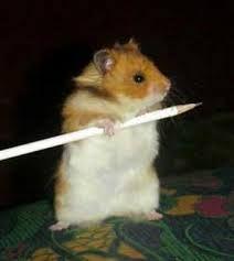 hamster cuidados - Buscar con Google