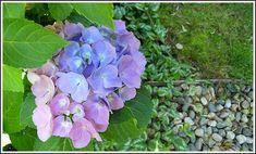 My Favorite Low-Maintenance Perennials for Sun & Shade - Andrea Dekker